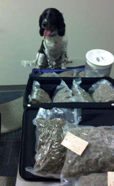 Narcotics Dog with Results