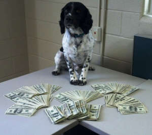 Narcotics Dog with Cash