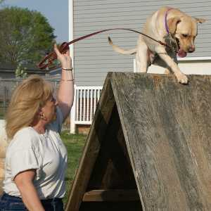 Victory K9 Training - Agility For Fun Training